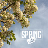 Spring sale Background with cherry blossoms. Royalty free stock photo illustration for greeting card, ad, promotion, poster, flier, blog, article, social media Stock Photos