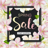Spring sale background with flowers. Season discount banner design with cherry blossoms and petals Stock Photos