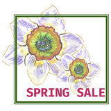 Spring sale banner, background with narcissus flowers, modern frame Royalty Free Stock Image