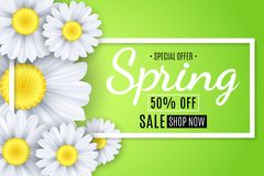 Spring sale banner. White flowers of chamomile on a light green background. Seasonal poster. Special offer. Vector illustration Stock Images