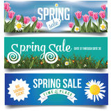 Spring sale banners with tulips and daisies. EPS 10 vector royalty free stock illustration for greeting card, ad, promotion, poster, flier, blog, article Royalty Free Stock Images