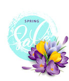 Spring sale concept. Spring background with flowering crocuses.Template . royalty free illustration