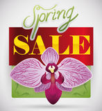 Spring Sale Design with a Beautiful Orchid, Vector Illustration Stock Photos