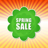 Spring sale in flower label over rays Stock Photos