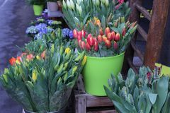 Spring sale of flowers. / Tulips Stock Images