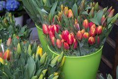 Spring sale of flowers. / Tulips Royalty Free Stock Photo