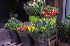 Spring sale of flowers. / Tulips Royalty Free Stock Photography
