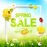 Spring sale flyer. Sunny meadow with flowers and ladybugs in the grass Stock Image