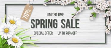 Spring sale frame chamomile wood blooming branch. Blooming tree branch, chamomile and frame and typographic on white wooden background. Spring sale. Background stock illustration