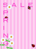 Spring Sale Sign with Daisies Flowers and Ladybugs Royalty Free Stock Image