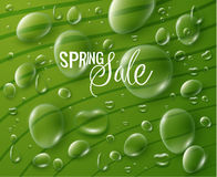 Free Spring Sale Vector Background Royalty Free Stock Photos - 85784328