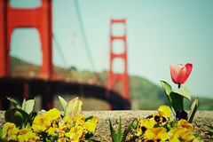 Spring in San Francisco Stock Photo