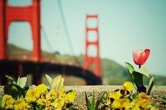 Spring in San Francisco Stock Photo