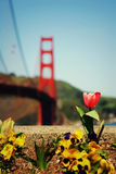 Spring in San Francisco Stock Image