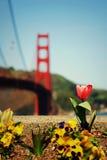 Spring in San Francisco Stock Image