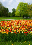 Spring in Saski park, Warsaw Royalty Free Stock Photography