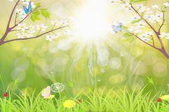 Spring. Scenary with bookeh  butterflys and flowers Royalty Free Stock Photos