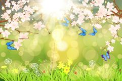 Spring scenary. Scenary of spring with bookeh ,flowers ,butterflys and ladybugs Stock Photography
