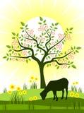 Spring scene Royalty Free Stock Image