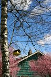 Spring scene. Friendly spring scene in the neighborhood with flowering fruit tree, birdhouse, residential house, and blue sky royalty free stock photos
