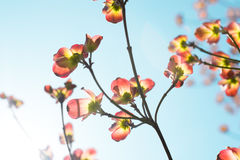 Spring scene. Spring time tree branch in blossom royalty free stock image