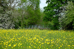 Spring Scene Stock Images