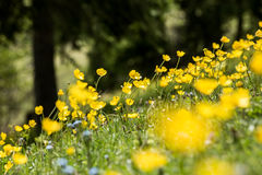 Spring scene in mountain. Stock Images
