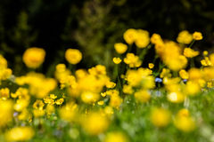 Spring scene in mountain. Royalty Free Stock Images