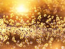 Spring scene. Stock Image