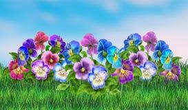Spring scene poster, Landscape. Spring scene poster, Pansy Violet flowers on Spring sun day background. Holiday Illustrations sky, green grass, Viola tricolor royalty free illustration