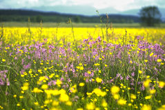 Spring scenery. Sunny spring scenery in Upper Bavarian Stock Images