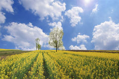 Free Spring Scenery Stock Images - 13561124