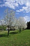Spring Scenery Royalty Free Stock Photos