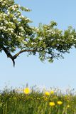 Spring scenery Royalty Free Stock Image