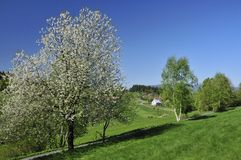 Spring  Scenery Stock Photography