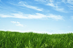 Spring scenery. Of green grass and blue sky Royalty Free Stock Photos