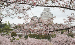 Spring scenery of a Japanese castle In the early morning light Stock Images