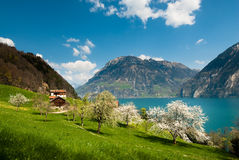 Spring scenery at lake lucern Stock Images