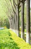 Spring scenery Stock Photos