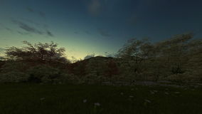 Spring scenery at sunrise stock footage