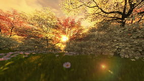 Spring scenery at sunrise, camera fly stock footage