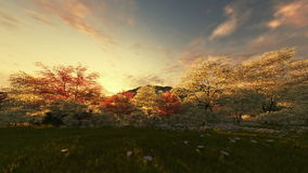 Spring scenery, time-lapse sunrise stock video footage