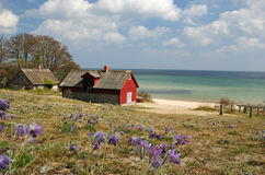 Spring sea landscape. With traditional Swedish house Stock Image