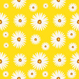 Spring seamless background with camomile flowers. Vector EPS10. Royalty Free Stock Images
