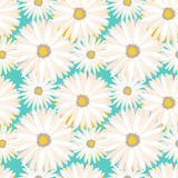 Spring seamless background with chamomile flowers. Vector EPS10. Royalty Free Stock Photography