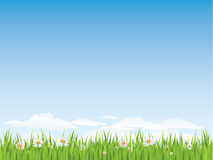 Spring seamless grass and flowers Royalty Free Stock Photo