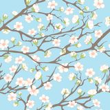 Spring seamless pattern. Spring background with branches and flowers for your design Royalty Free Stock Images