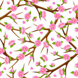 Spring seamless pattern with branches of tree and sakura flowers. Seasonal illustration Stock Photos