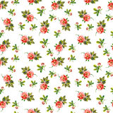 Spring seamless pattern with wild roses Stock Photos