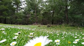 Flowers in the jungle. When the spring season comes, the flowers are open in the forest Stock Photography